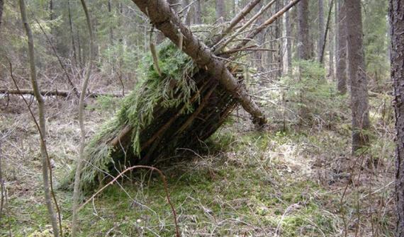 Полезные советы: Поход в лес