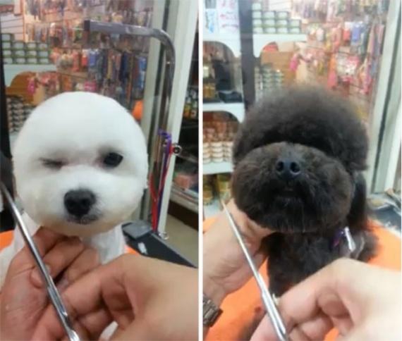 Животные: Собачья мода