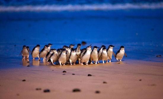 Жизнь: Пингвины