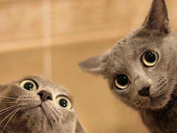 Животные: Герасим и Мазай