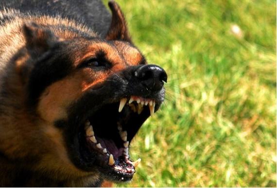 Полезные советы: Как спастись от хищников