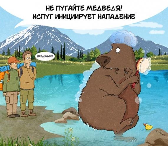 Животные: Факты о медведях