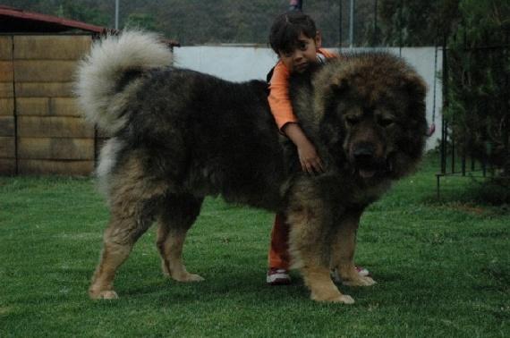 Животные: Аленка и кавказец