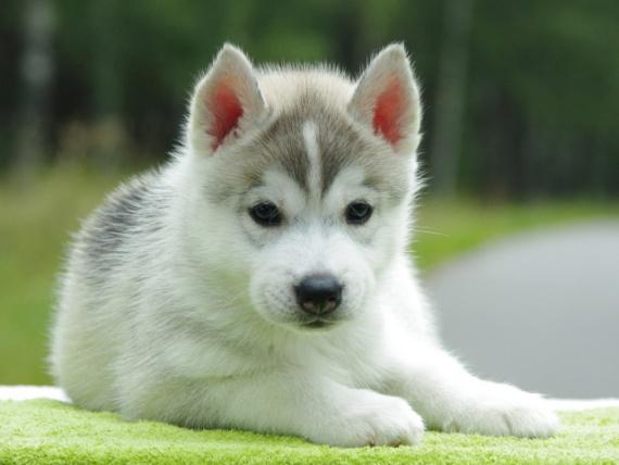 Общество: У нас будет щенок!