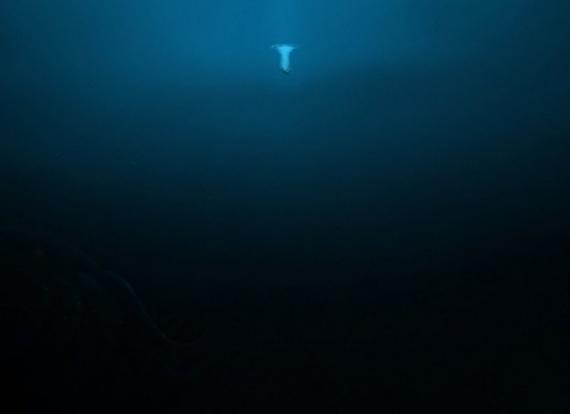 Природа: Не полезу в море:-)