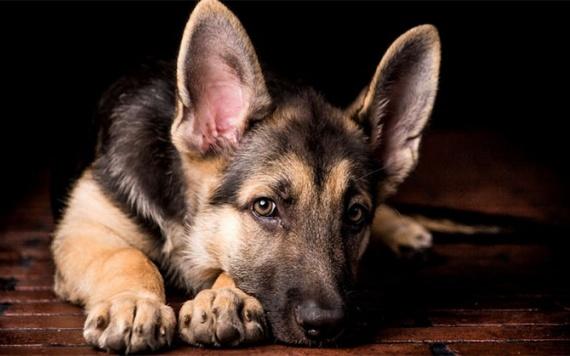 Животные: О чем говорит собака