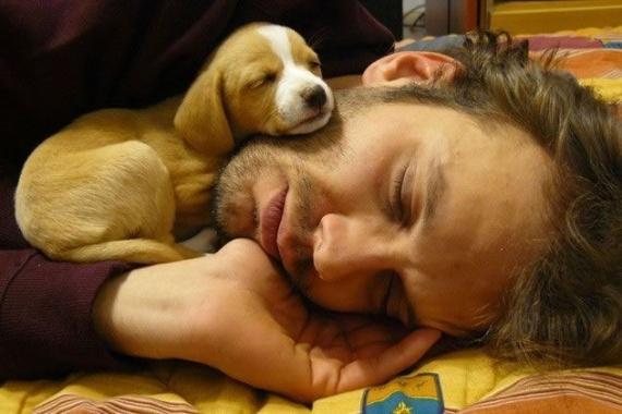 Животные: Утомились:-)