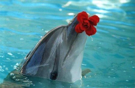 Животные: День дельфина