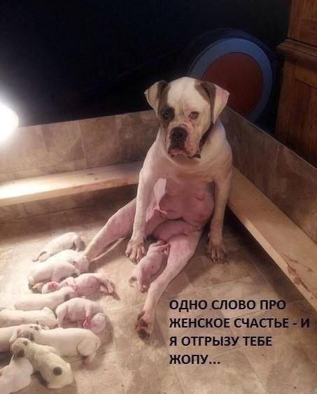 Животные: Радость материнства
