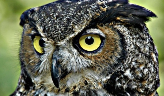 Животные: Мифы о животных