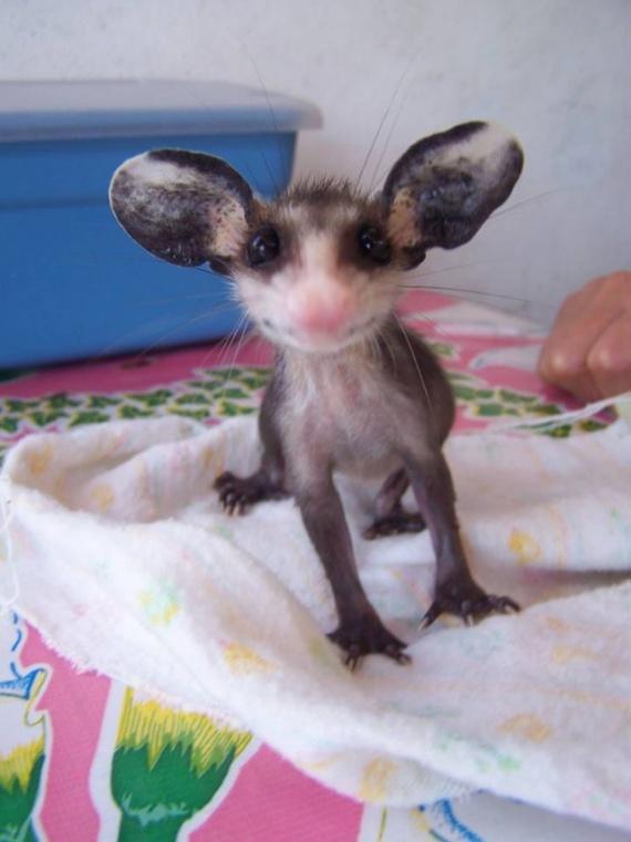 Животные: Милота:-)