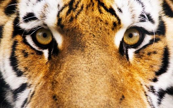 Животные: Как видят животные