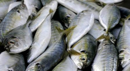 Полезные советы: Выбираем  рыбу