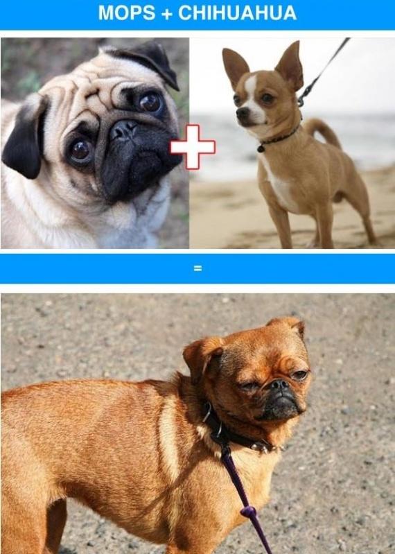 Животные: Если смешать породы
