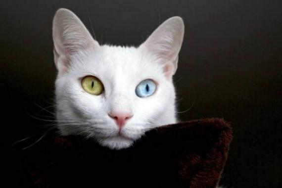 Животные: Самые дорогие кошки