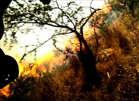 Проишествия: Смерть в огне