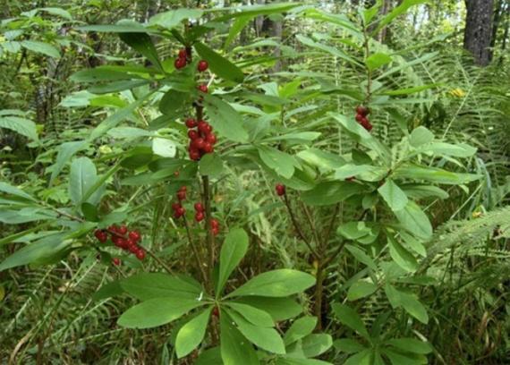Природа: Опасные дары леса