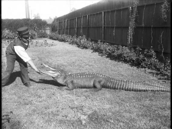 Животные: Человек и крокодил