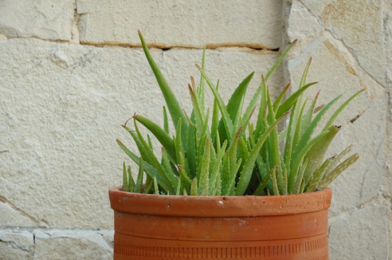Домашнее хозяйство: Опасные растения
