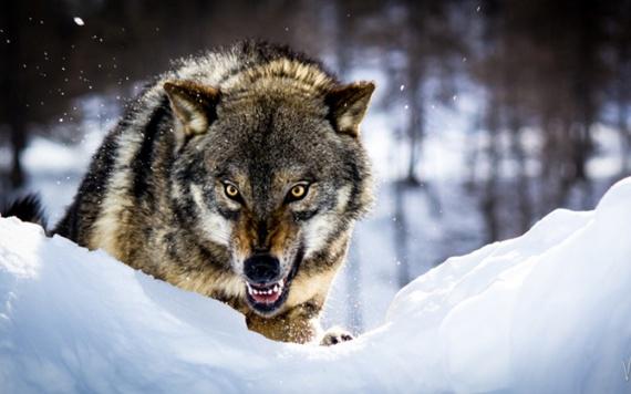 Животные: Как победить хищника