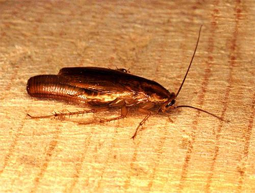 Домашнее хозяйство: Домашние насекомые