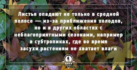 Интересное: Осень