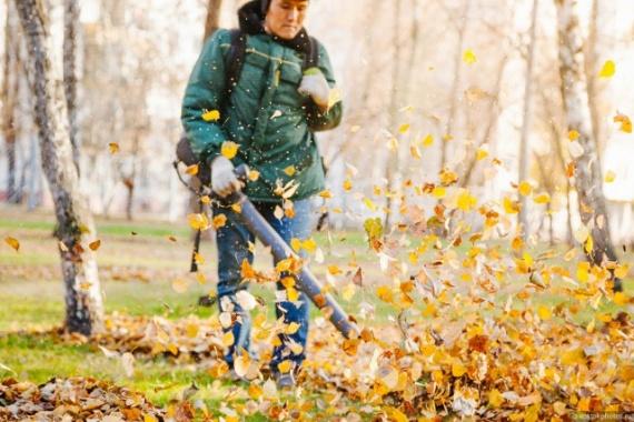 Общество: Зачем убирают листву