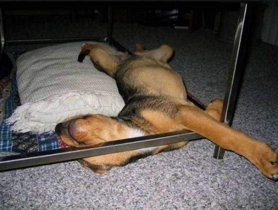 Животные: Устали...:-)