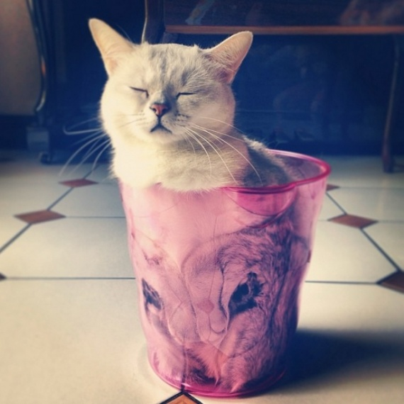 Животные: Жидкие коты
