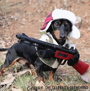 Юмор: Вооружен и очень опасен!