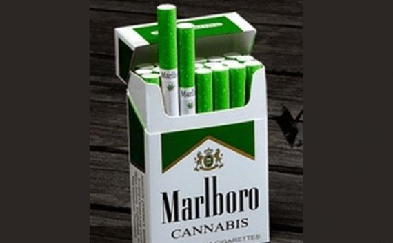 قیمت سیگار سناتور Мы создаем общение