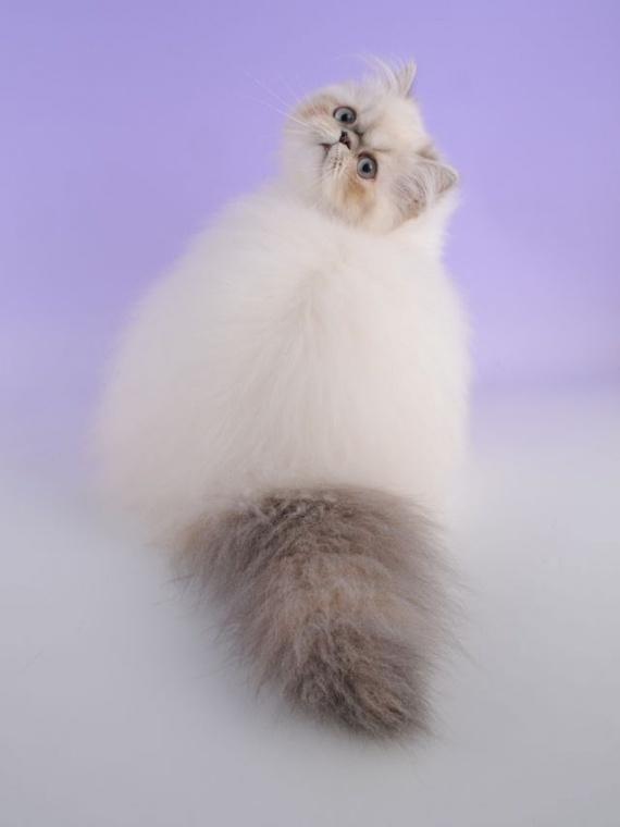 Животные: Кошачий пост