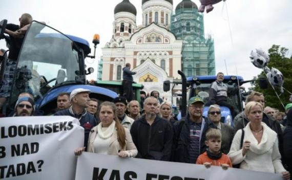 Экономика: Яйца  - последняя гордость Эстонии