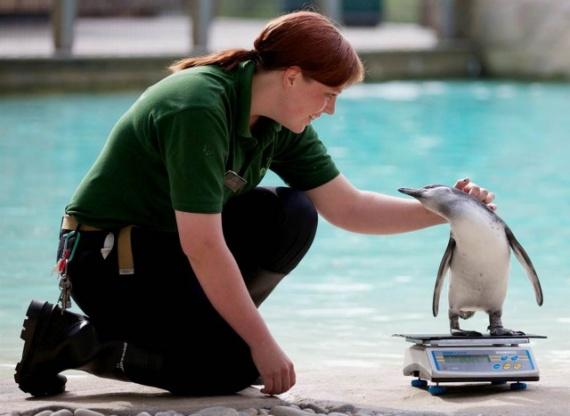 Интересное: Можно ли есть пингвинов?