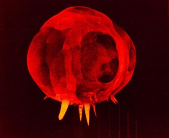 Интересное: С чего начинается ядерный взрыв