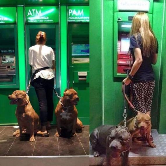 Картинки: Национальные традиции общения с банкоматом