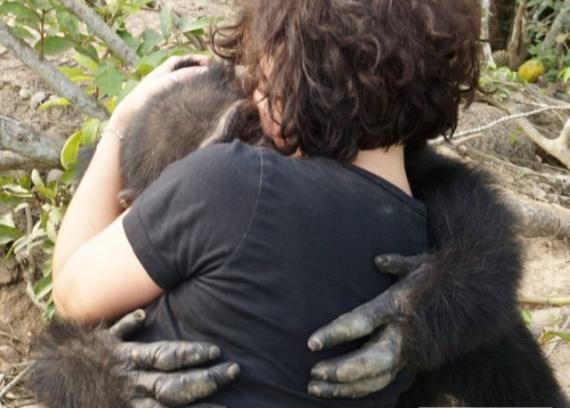 Животные: Выживший: история шимпанзе Понсо