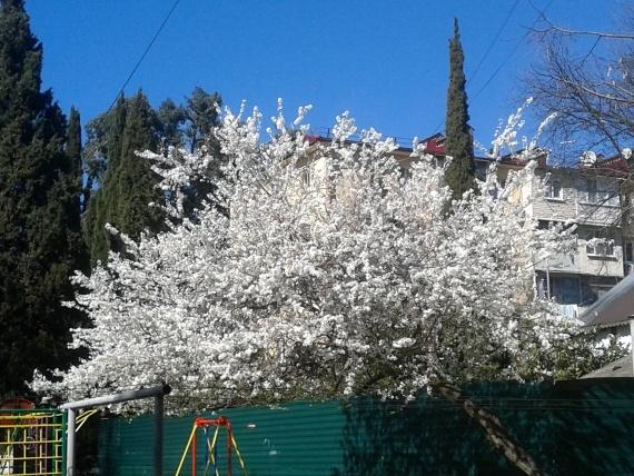 Адлер: А к нам окончательно пришла весна