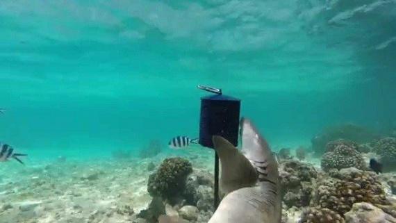 Животные: Интересные факты о акулах