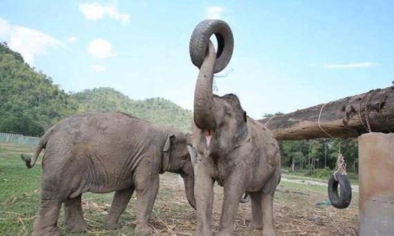 Животные: Сердце, полное любви