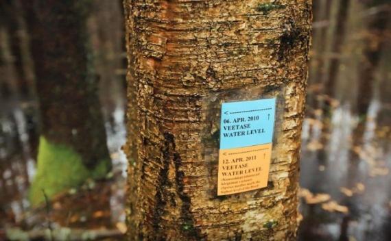 Природа: Волшебный парк Соомаа в Эстонии
