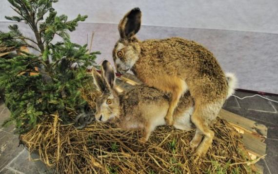 Животные: Секс в мире животных