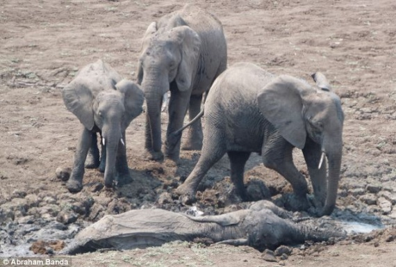 Животные: Слоны лучше людей