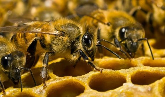 Интересное: Факты о пчелах