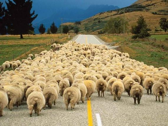 Безумный мир: Овцы накурились