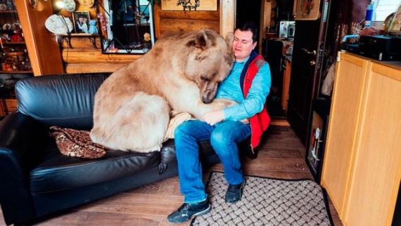 Животные: Мой ласковый и нежный зверь