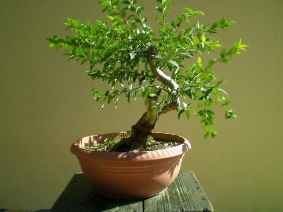 Домашнее хозяйство: Домашние растения, приносящие благополучие