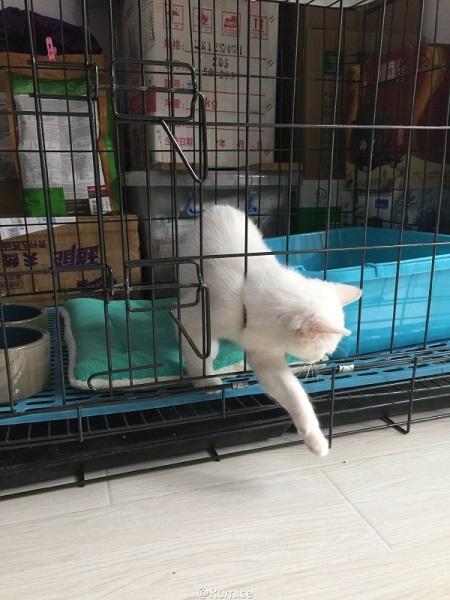 Животные: Кот, это жидкость