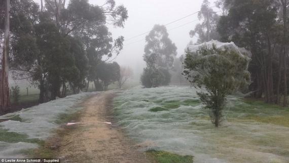 Интересное: Пауки захватили парк в Австралии