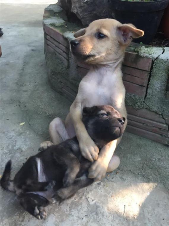 Животные: Неразлучные